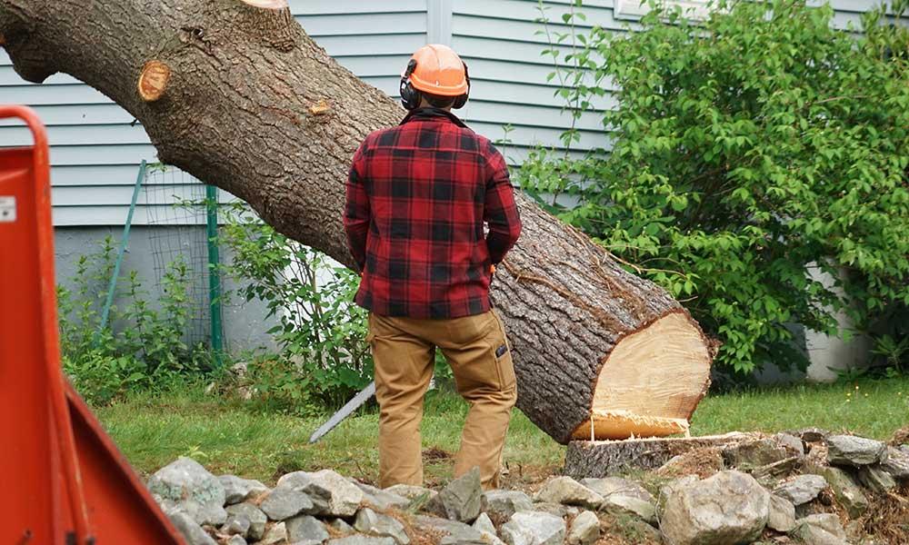 tree removal denver