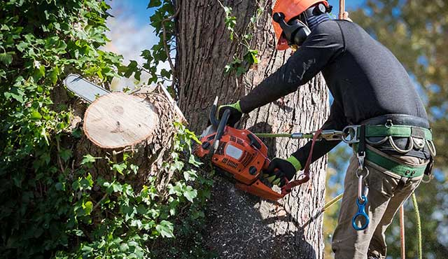 tree trimming denver