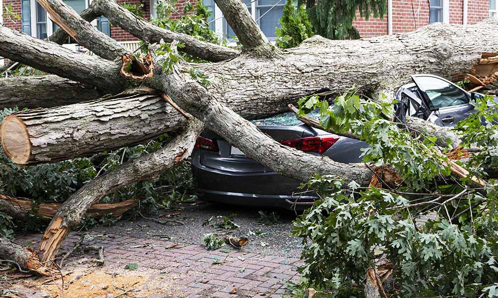 emergency tree removal company denve