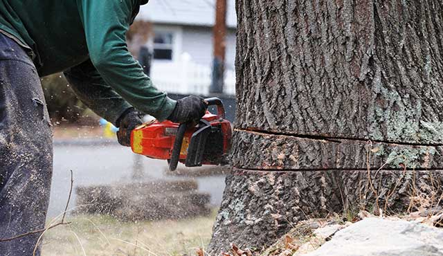 tree removal services denver